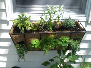 Strawberries, chamomile, chevril out the sides, sage, tarragon, lavender, and chard ontop.